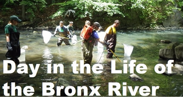 A day of science, history, art, and exploration in the Bronx River