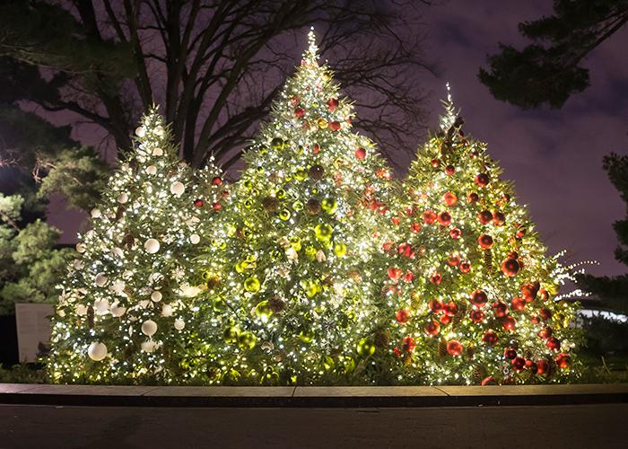 nybg-christmas-tree-article