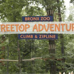 Treetop Adventure at the Bronx Zoo