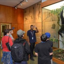 College Students from the Bronx Part of Guided Tour Program at the American Museum of Natural History