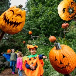 Spooky Pumpkin Garden at NYBG