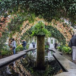 Giveaway: Tickets to the Orchid Show at the New York Botanical Garden